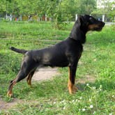 Дрессировка охотничьих собак: отработка команд
