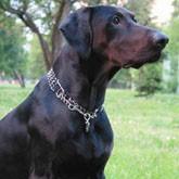 Дрессировка охотничьих собак: отработка прыжков, команды