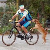 Исправление недостатков охотничьей собаки
