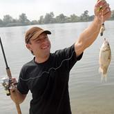 Рыбаки ополчились против золотой рыбки