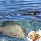 Отдых по карточкам: за что будут платить любители рыбалки в РФ