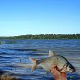 Рыбалка на Истринском водохранилище: где клюет рыба