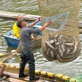 Рыбакам не дадут поймать больше 5 кг
