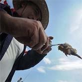 Рыбные места стали предвыборными
