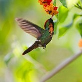 10 природных парков, в которых лучше всего наблюдать за птицами