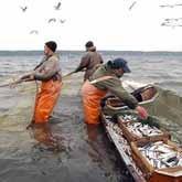 Белорусская рыба полезнее и дешевле - считают белорусские эксперты