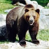 Неудачная охота на медведя, или первое свидание