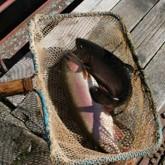 Реки скудеют, вся надежда — на рыбоводов