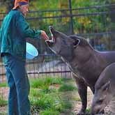 Зоопарки: законы звериного бизнеса