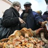Где собирают грибы жители Казани