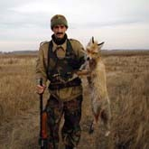 Охота на лису с гончей собакой