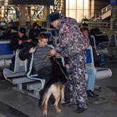 Собачья работа, или волкособы на службе