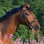 Из истории иппотерапии: Лечение лошадью от Гиппократа и до наших дней