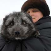 Зверохозяйства в Сибири исчезают