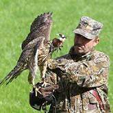 Дикая охота короля птаха