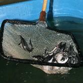 Как построить рыбный бизнес