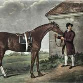 Самая знаменитая лошадь XVIII века - непобедимый Эклипс