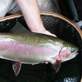 Рыбоводство: форелевое царство в Кировской области