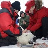 Программы Владимира Путина по спасению редких животных