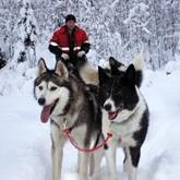 Первая великая гонка на собачих упряжках в Карелии