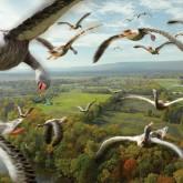 Миграция перелетного гуся Весна - 2012. Карты, сроки, схемы, ВИДЕО