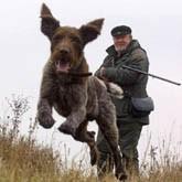 В Челябинской области охотников ждут перемены