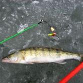 Зимняя рыбалка по последнему льду