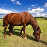 Как избежать отравления лошади ядовитыми растениями