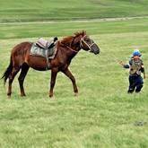 Породы лошадей: Степная казахская лошадь