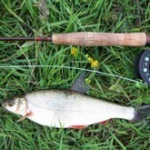 Рыболов, пусти на свой порог весну!