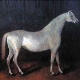 Сметанка - родоначальник орловской рысистой породы лошадей
