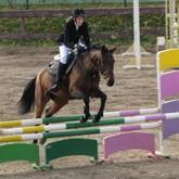 Как найти взамопонимание с лошадью?