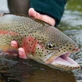 Ловись, рыбка, большая и маленькая, или о проблемах рыбоводства в Южной Осетии