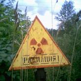 Беларусь: В зоне непуганых кабанов