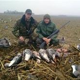Весенняя охота на гуся в Беларуси