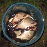 Рыбалка на Шатурских озерах