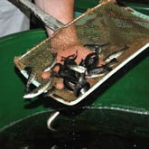 Кому мешает рыбоводство на Сахалине?