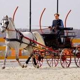 Драйвинг - искусство управления лошадью