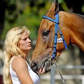 Понимание психологии лошади: Как и чему правильно обучать лошадь
