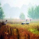 Заповедники Беларуси: Край синих озер
