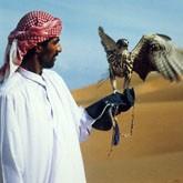 Сибирские каникулы арабских кречетов (ВИДЕО)