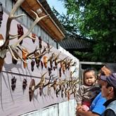 Охотничьи трофеи: аномальные рога