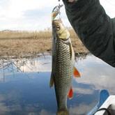 Ловля голавля в Волгоградской области