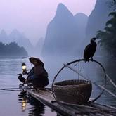 Традиционная китайская рыбалка с бакланами