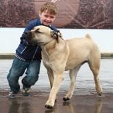 Фотоотчет с региональной выставки собак