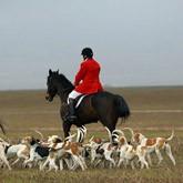 Парфорсная охота на койота в США