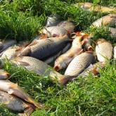 Рыбалка на Сенежском озере: По Руси с Проводником