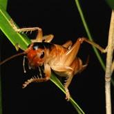 Новые виды живых организмов 2010 описанные впервые