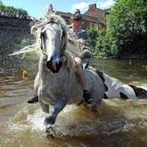 Цыганская конная ярмарка в Эпплби