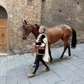 Скачки на лошадях: Палио ди Сиена 2011